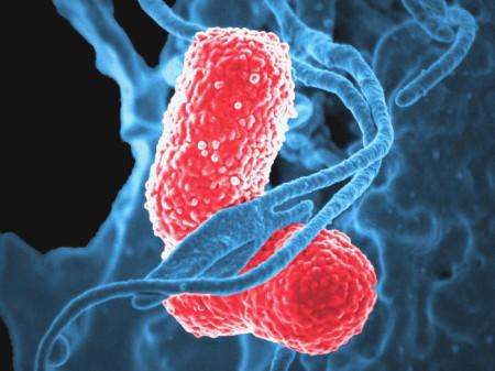 бактерии, микрофлора