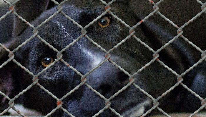В России преобладает программа убийства бездомных животных