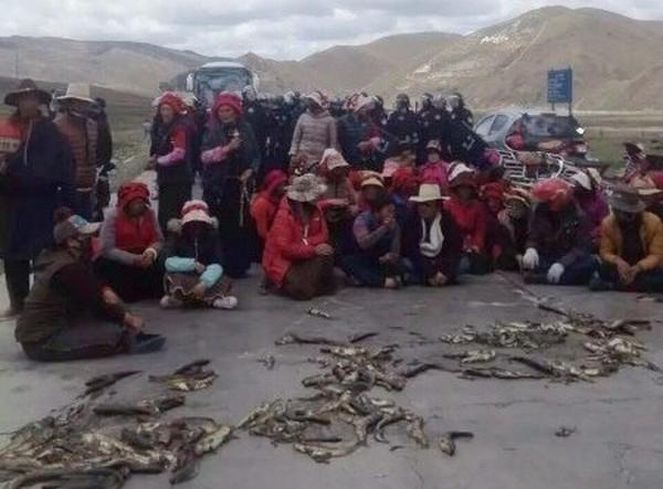 Тибетцы протестуют против загрязнения окружающей среды горной компанией. Уезд Кандин провинции Сычуань. Май 2016 года. Фото: weibo.com