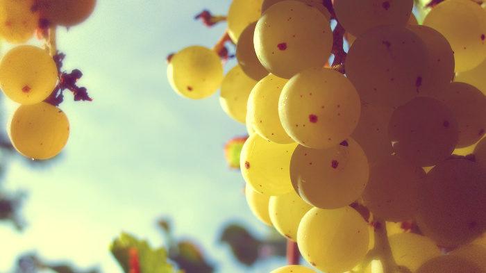 Виноградные косточки защищают от колоректального рака