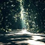природа, прогулка, человек, лес