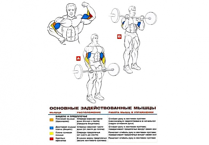 Фото: sportwiki.to/Подъем_штанги_на_бицепс