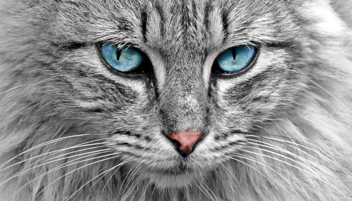 Хозяйка долго искала кота. А он в это время ехал на другой конец страны в почтовой коробке!