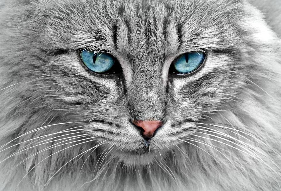 Кошки обладают удивительными способностями. Фото: pixabay.com/CC0 Public Domain