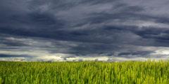 ГМО вызывают анемию и лейкоз?