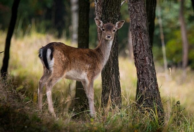 Европейская природа за 13 тысяч лет сильно изменилась. Фото: pixabay.com/CC0 Public Domain