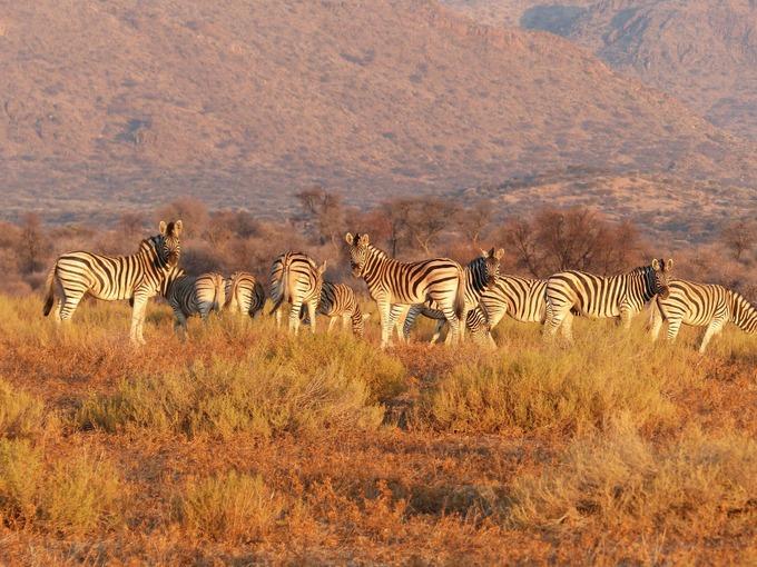 В Африку приезжают любители приключений и сафари. Фото: pixabay.com/CC0 Public Domain