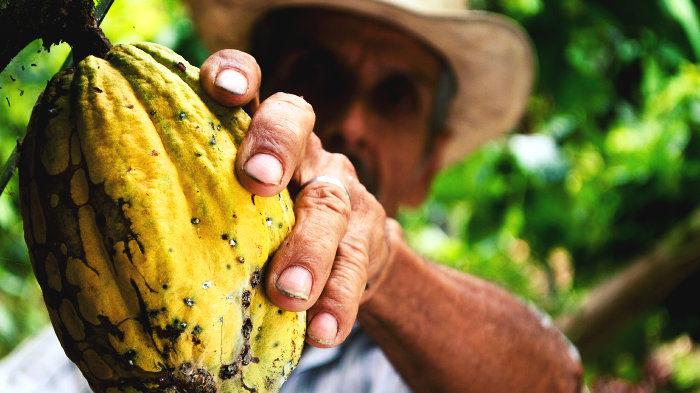 В лесах Южной Америки могут скрываться генетические разновидности какао