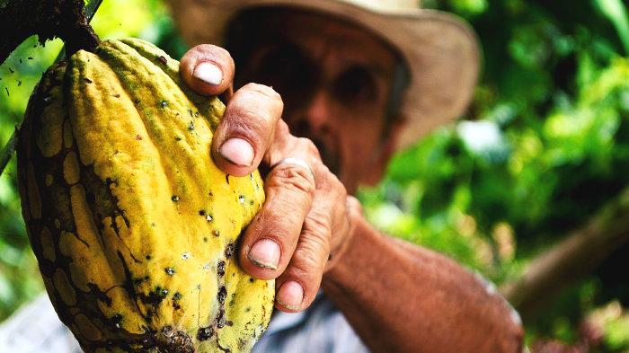 польза какао, какао бобы, рецепт какао