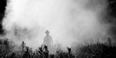 Не ешь меня: пять побочных эффектов пестицидов