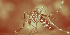 Чем можно заразиться от укуса комара?