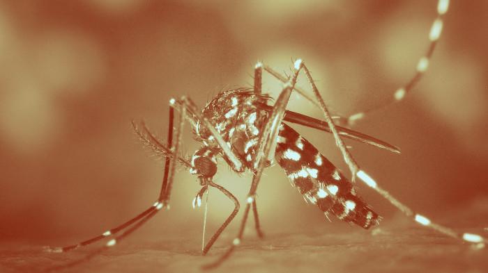 укус комара, вирус