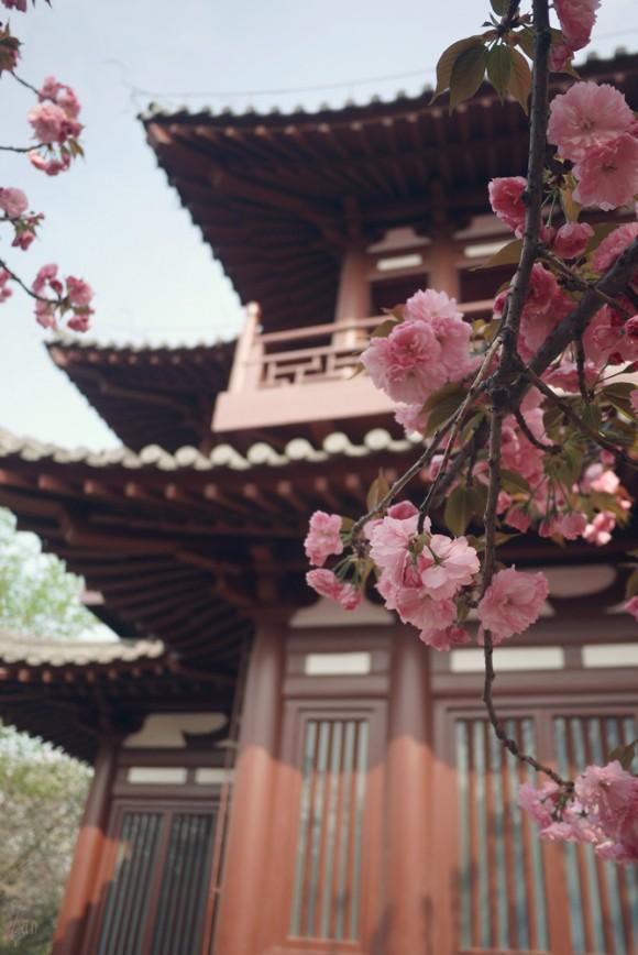 Храм Цинлун в Сиане, на месте древней столицы Чанъань. Фото: mingsongjia/Tumblr