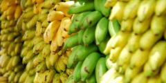 Топ-5 полезных экзотических фруктов
