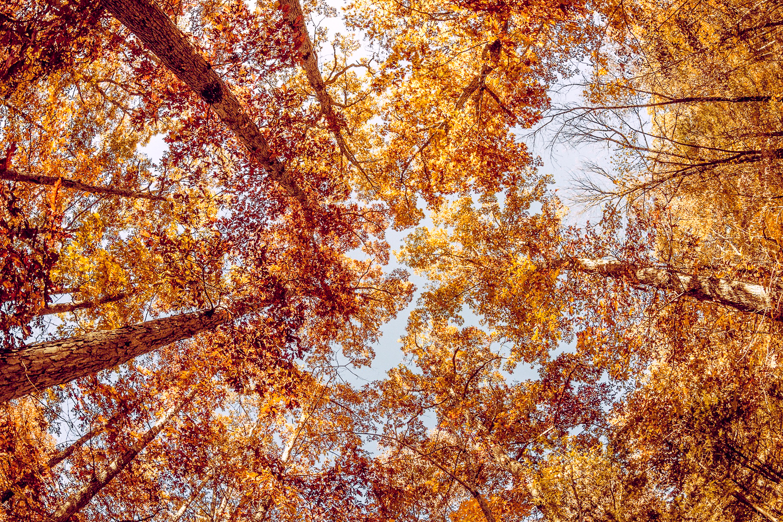 Не грустите осенью: профилактика депрессии