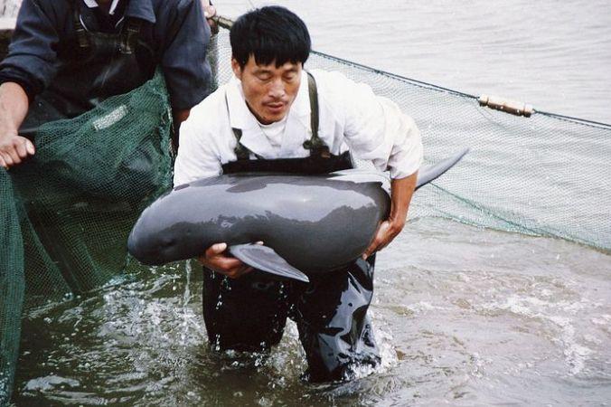 Китайский речной дельфин. Фото: China Photos/Getty Images)
