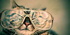 5 полезных вещей, которым могут научить только коты