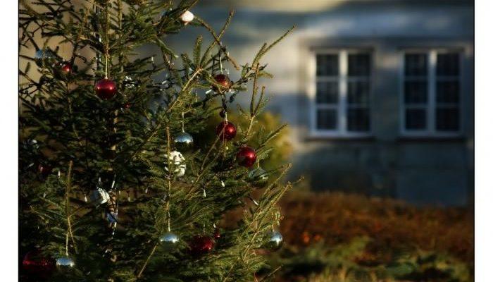 Все о ёлках в преддверии Нового года