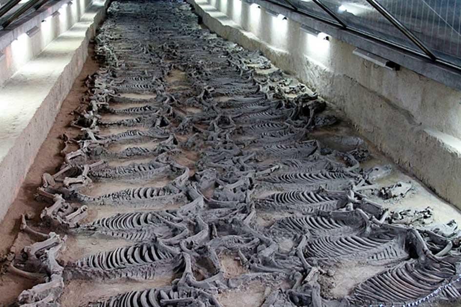 скелеты лошадей