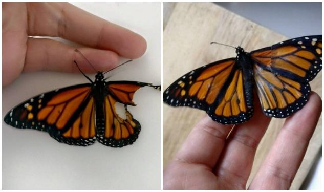бабочки, девушка, крыло