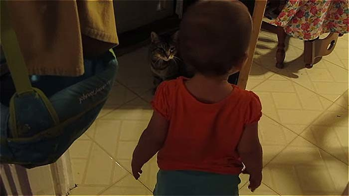 Отцу никто не верил, что маленькая дочка разговаривает с кошкой. Он предоставил доказательство (видео)