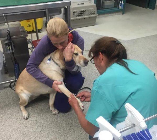 спасатели, собака, женщина