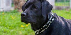 Собака упала замертво на глазах прохожих. Звонок в полицию их развеселил!