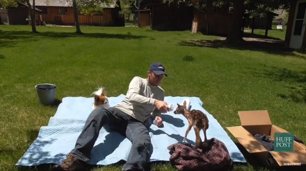 оленёнок, животное, мужчина