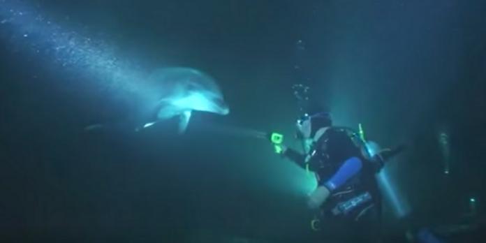 дельфин, крючок, аквалангист