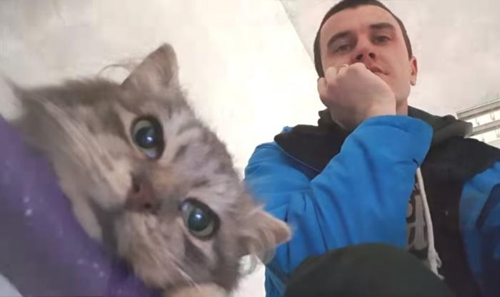 животное, кошка, парень