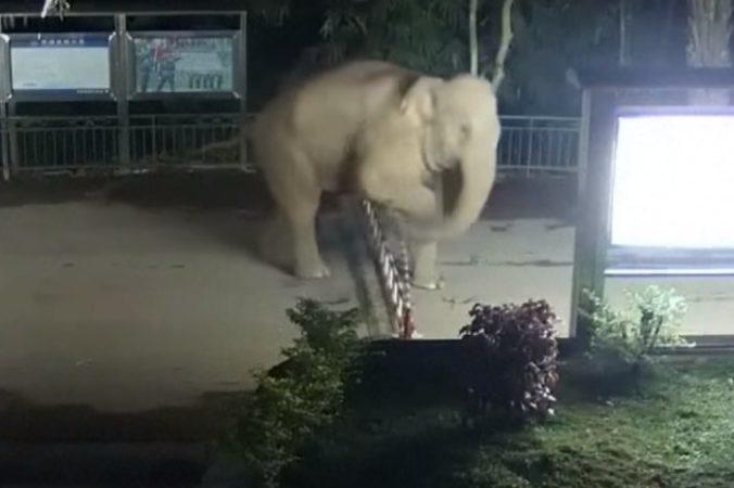граница, китай, слон, лаос