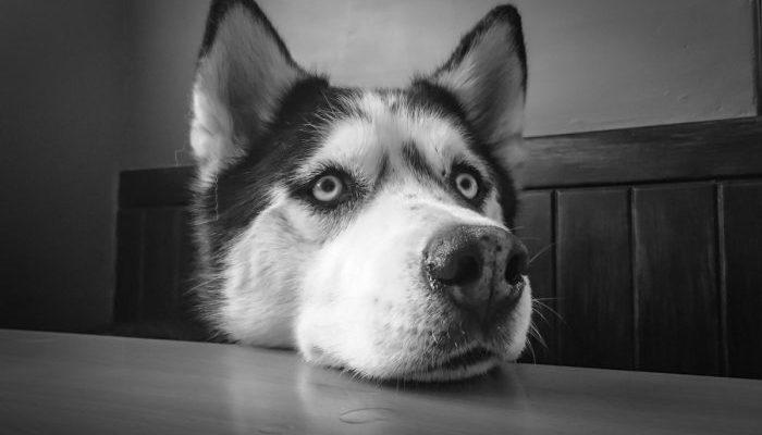 Семья потеряла любимую собаку. Не прошло и месяца, как произошло чудо