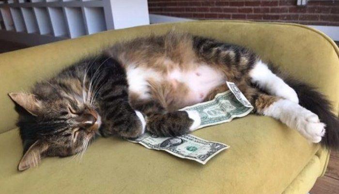 Деньги вместо мышей. Сотрудники офиса не понимали, откуда у их кота ежедневно появляются деньги