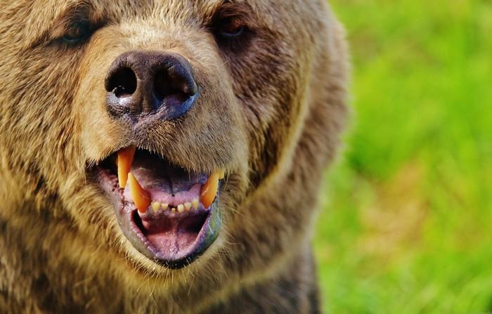 Медведь забрался в палатку туристов. Мать закрыла собой сына