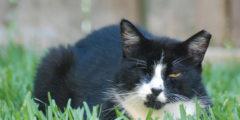 Кот поссорил влюблённых. Оказалось, нижнее бельё он утащил у соседки
