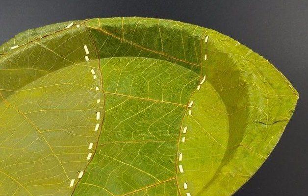Одноразовая посуда из листьев? Гениальное решение!