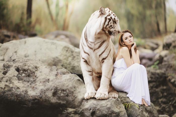 Белый тигр сидит на камне, рядом с девушкой