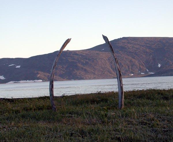 кости китов на берегу реки
