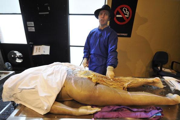 выставка пластинированных тел