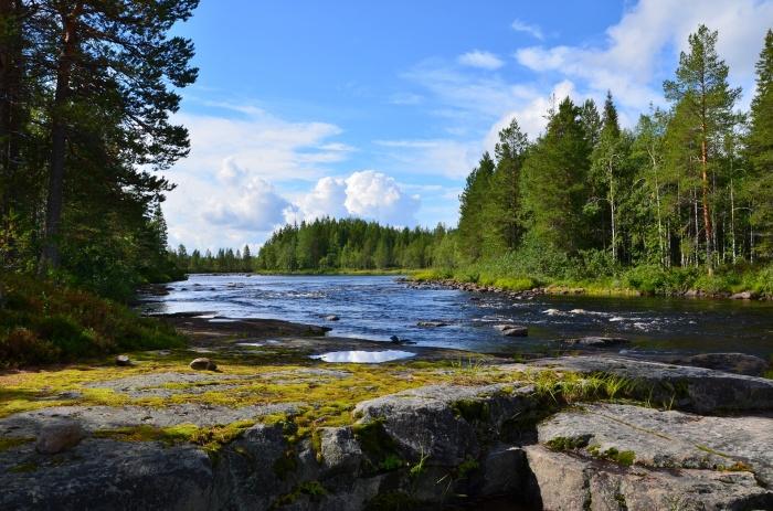 мелководная река в лесу