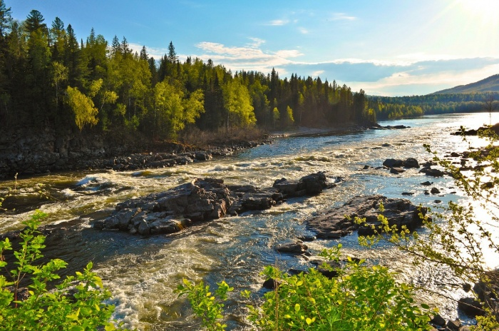 мелководная река в солнечном лесу