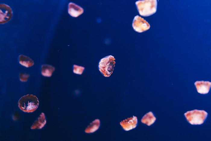 «Просто дай мне умереть, это невыносимо», — молила маму 14-летняя девочка после укуса медузы