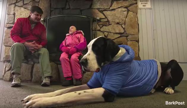 Собака помогла девочке с редким заболеванием научиться ходить без костылей