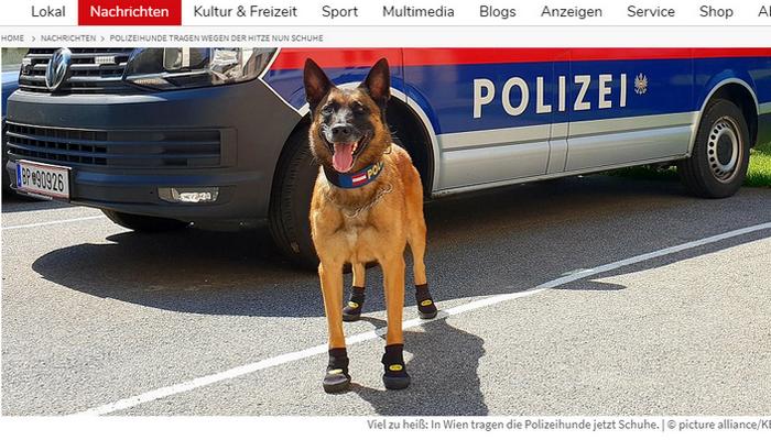 Полицейские собаки в Европе из-за жары носят обувь
