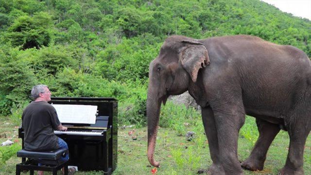 (Видео) 62-летняя слепая слониха танцует под музыку Баха