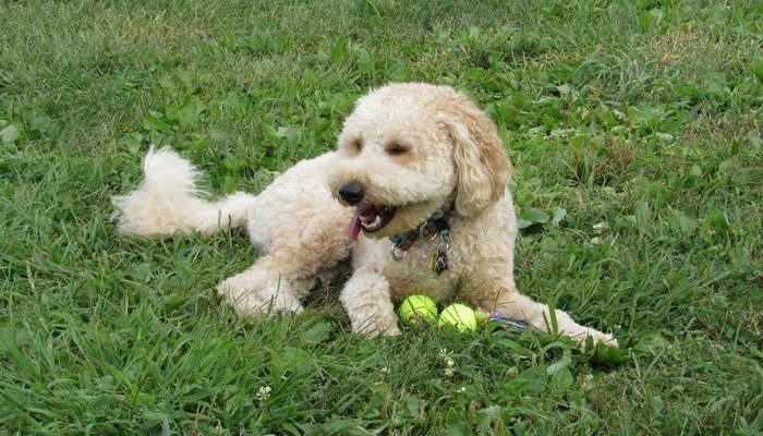 Хозяйка пса погибла в автокатастрофе. Он три недели ждал её возвращения на месте аварии