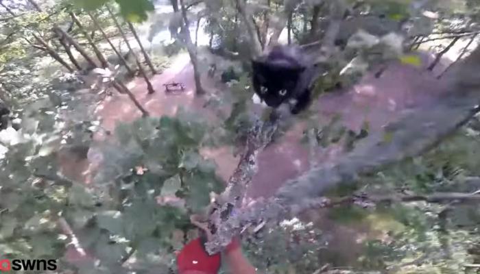 (Видео) Садовник 5 дней пролежал в больнице, после того как спас с дерева кошку. Испуганное животное задало ему жару!