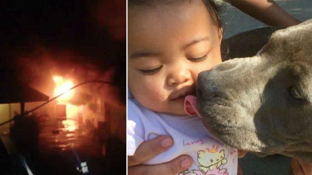 Собака спасла семью от пожара и пыталась вынести 7-месячного ребёнка из горящего дома