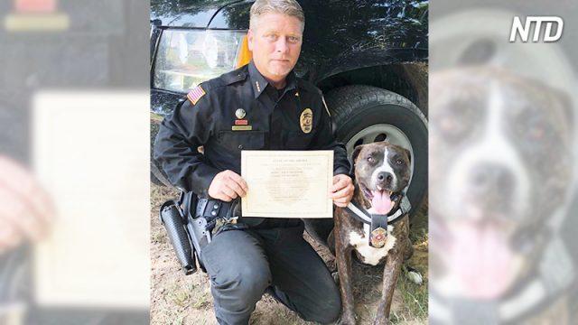 Питбуля хотели усыпить за чрезмерную активность. Но теперь эта собака служит в полиции!