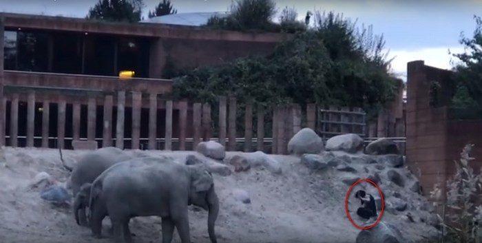 (Видео) Парень залез в вольер к слонам. Животные повели себя достойно и вежливо выпроводили незваного гостя